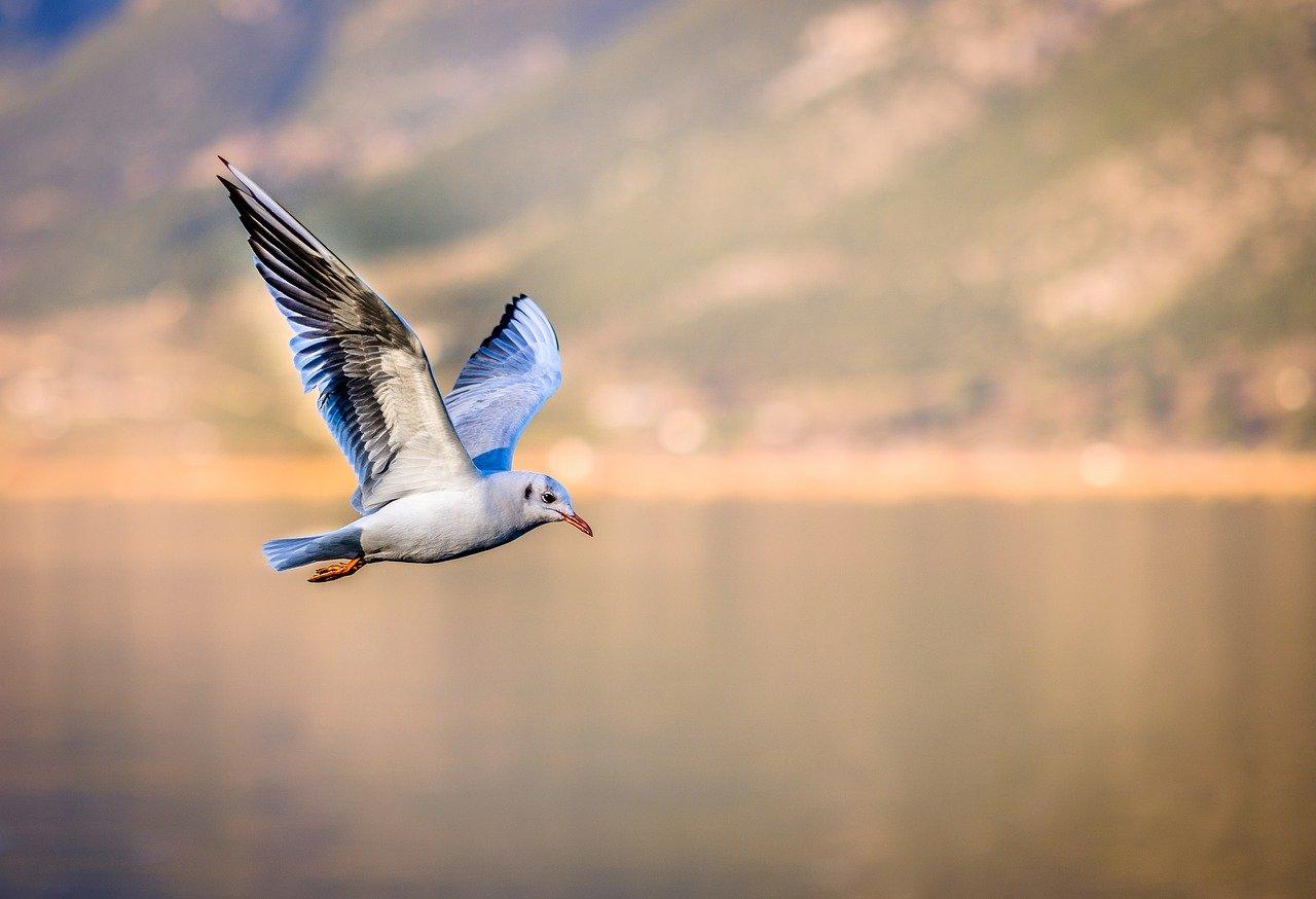 手中にある1羽の鳥は、薮の中にいる2羽の鳥より価値がある