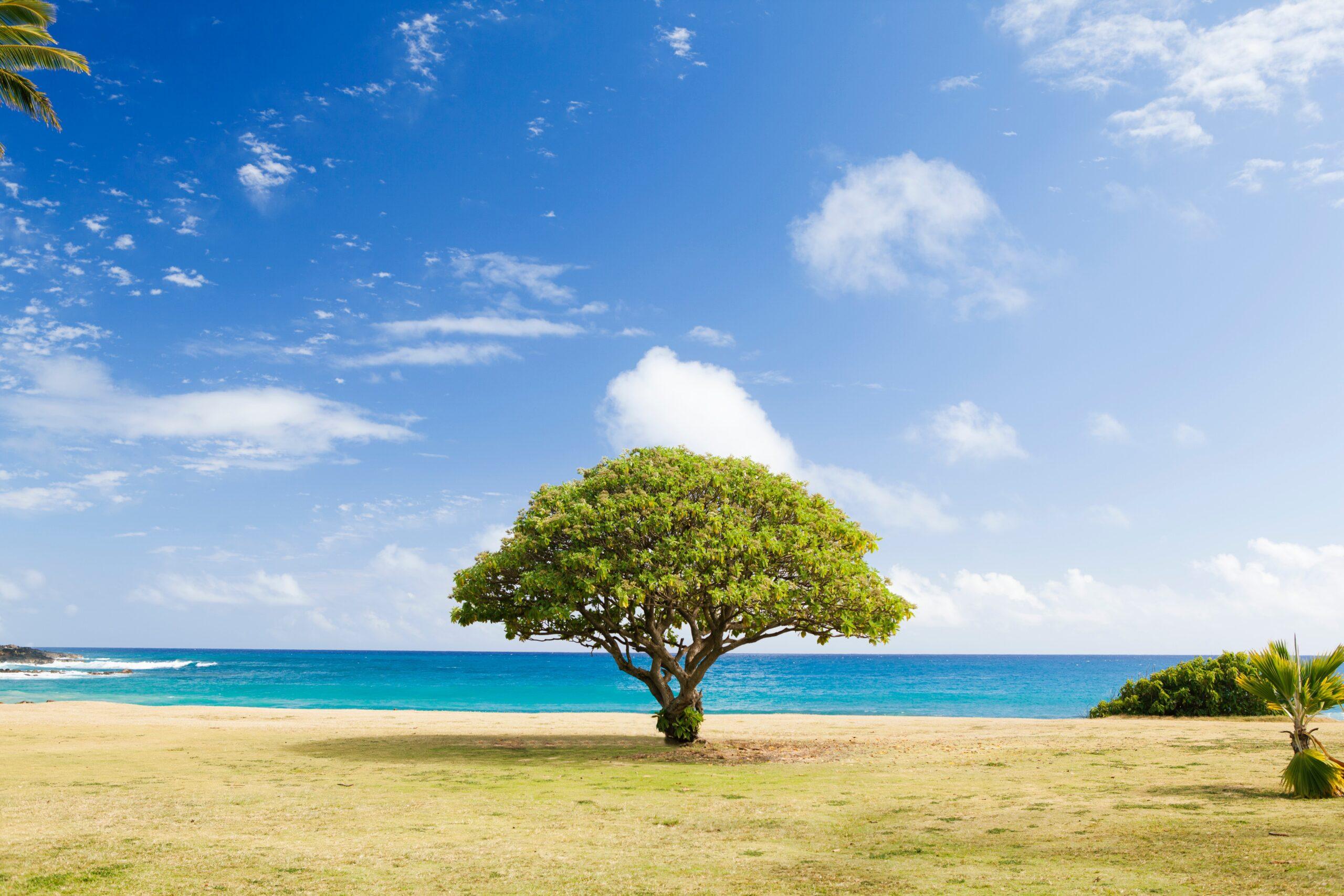 金のなる木は水では生きぬ、汗をやらねば枯れていく