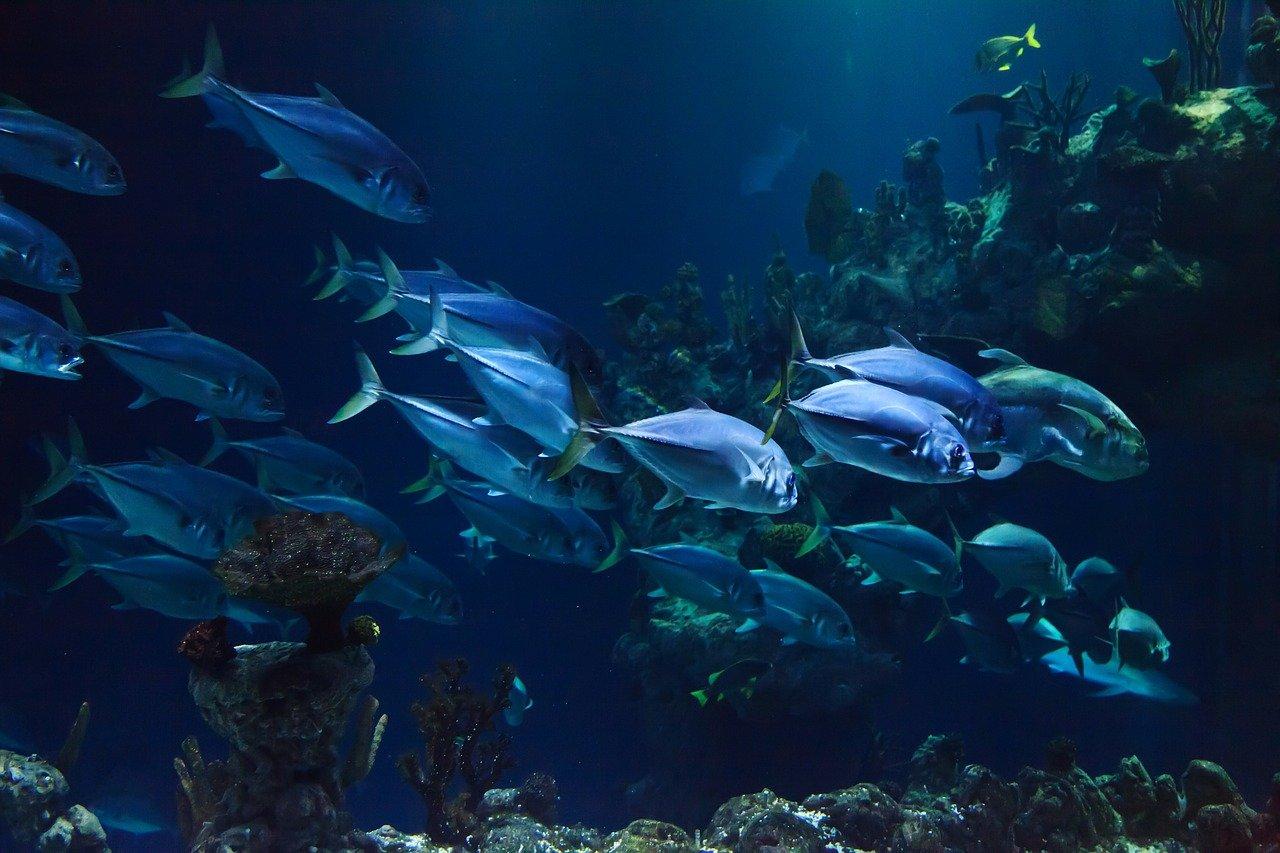 よい魚は底に近いところを泳いでいる